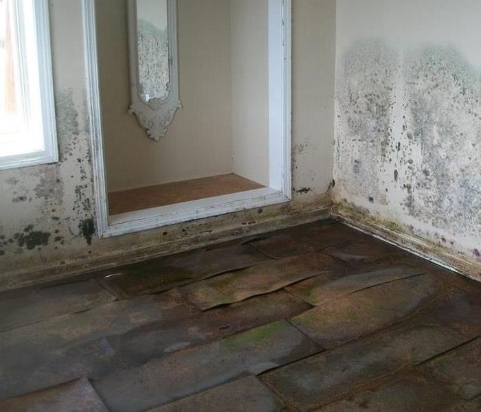 Cottage Suffers Severe Mold Damage
