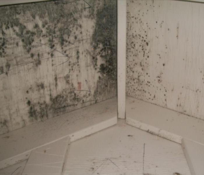 Mold Remediation Mold Remediation Services and Helpful Techniques to Prevent Mold Growth